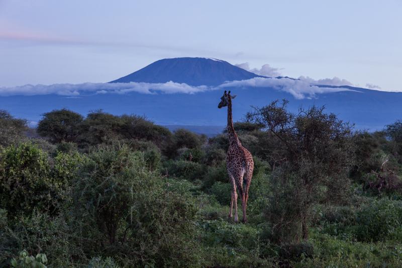 Kilimandscharo © Robert Sommer