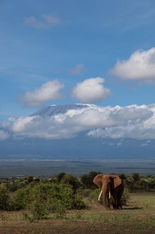 Elefant | Kilimandscharo © Robert Sommer