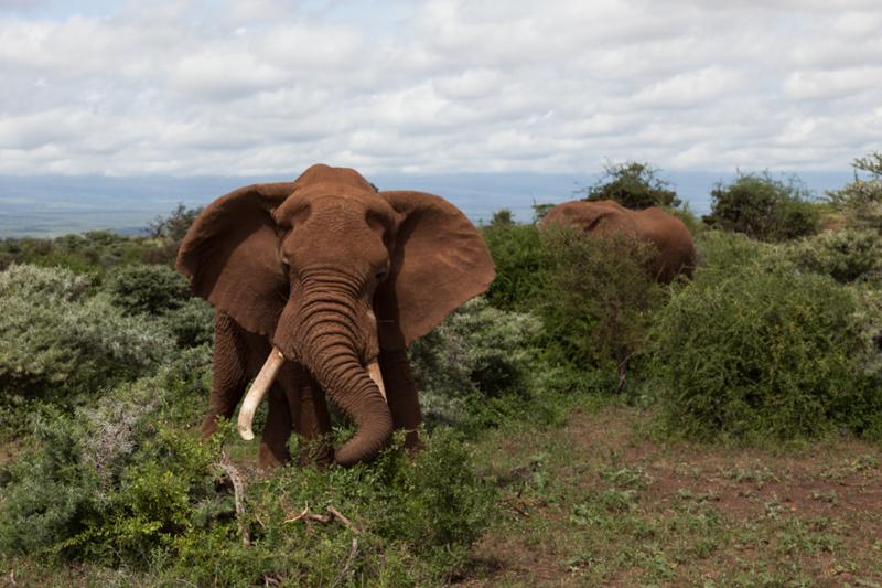 Elefanten © Robert Sommer