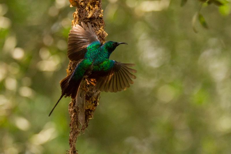 Safari © Robert Sommer