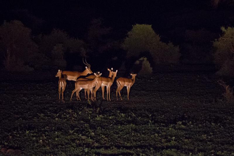 Auf Nachtpirschfahrt © Robert Sommer