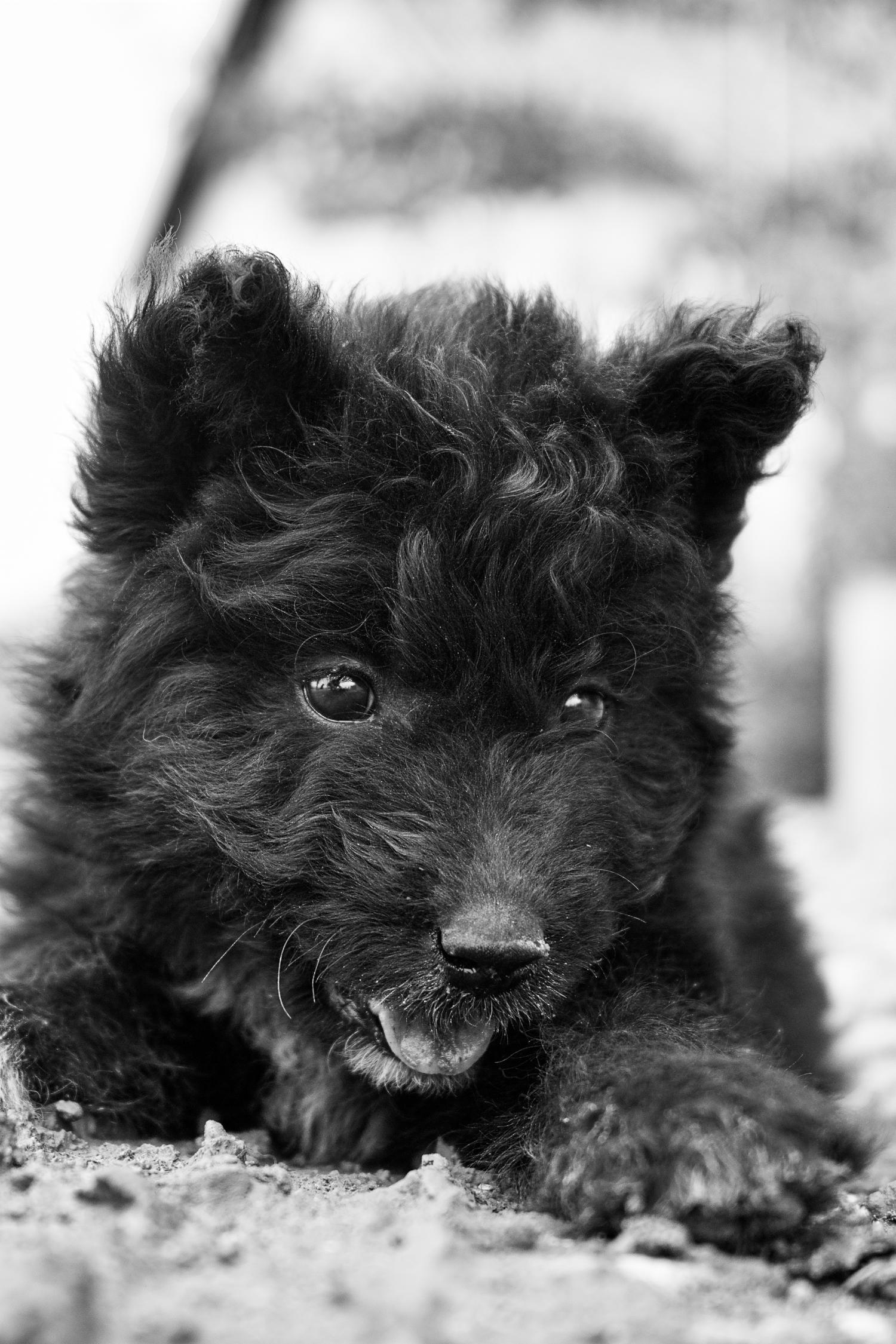 Hundeblick - Einfach unwiderstehlich | Schwarzweiß-Fotografie