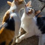 Liebkosungen abgelichtet | Haustiere fotografieren