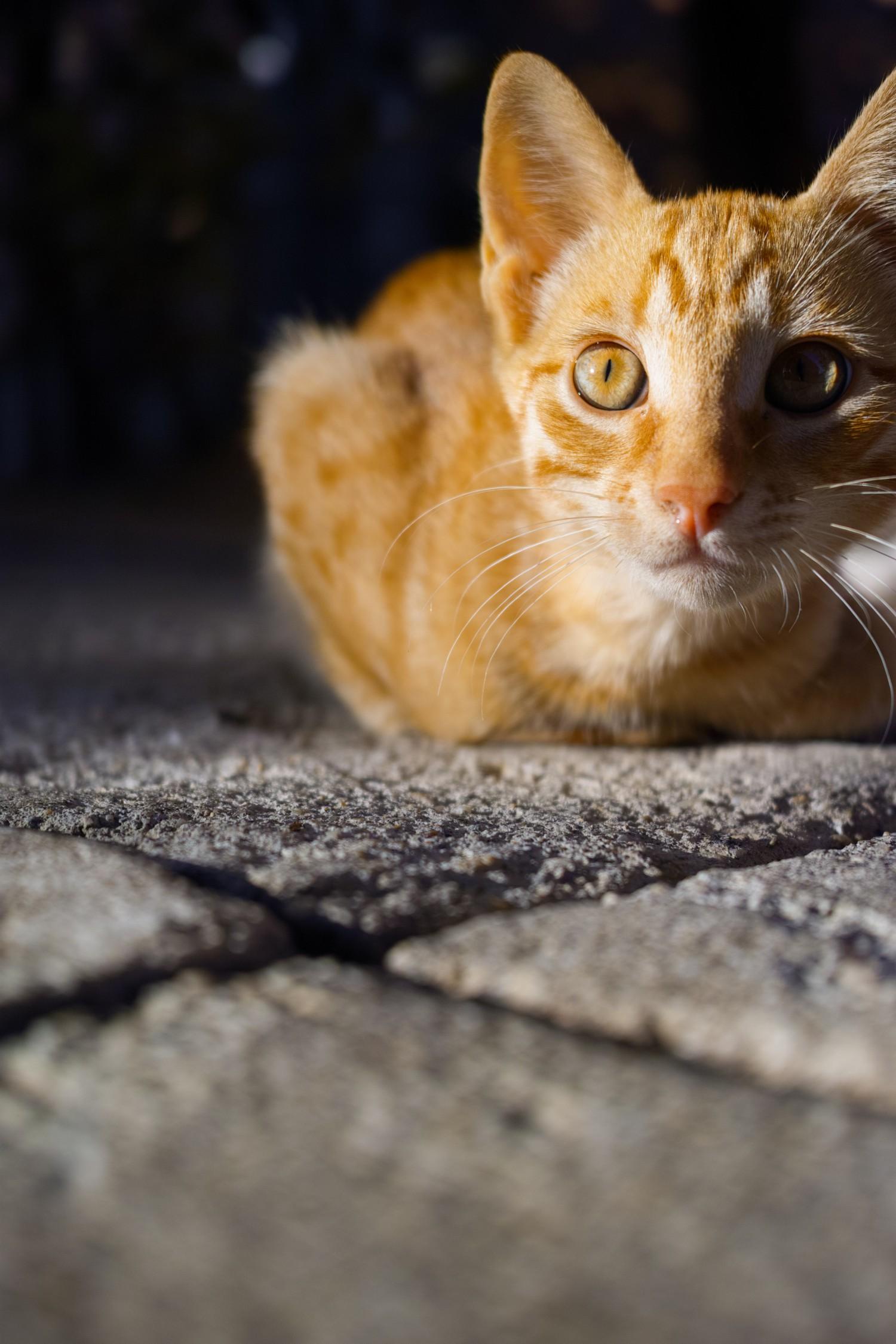 Serienbilder unterstützen das Timing   Haustiere fotografieren
