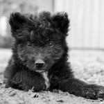 Tierporträts in der Direktaufnahme   Haustiere fotografieren