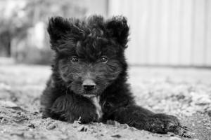 Tierporträts in der Direktaufnahme | Haustiere fotografieren