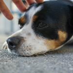 Geduld lohnt sich | Haustiere fotografieren