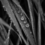 Die Kraft jedes einzelnen Regentropfens | Schwarzweiß-Fotografie