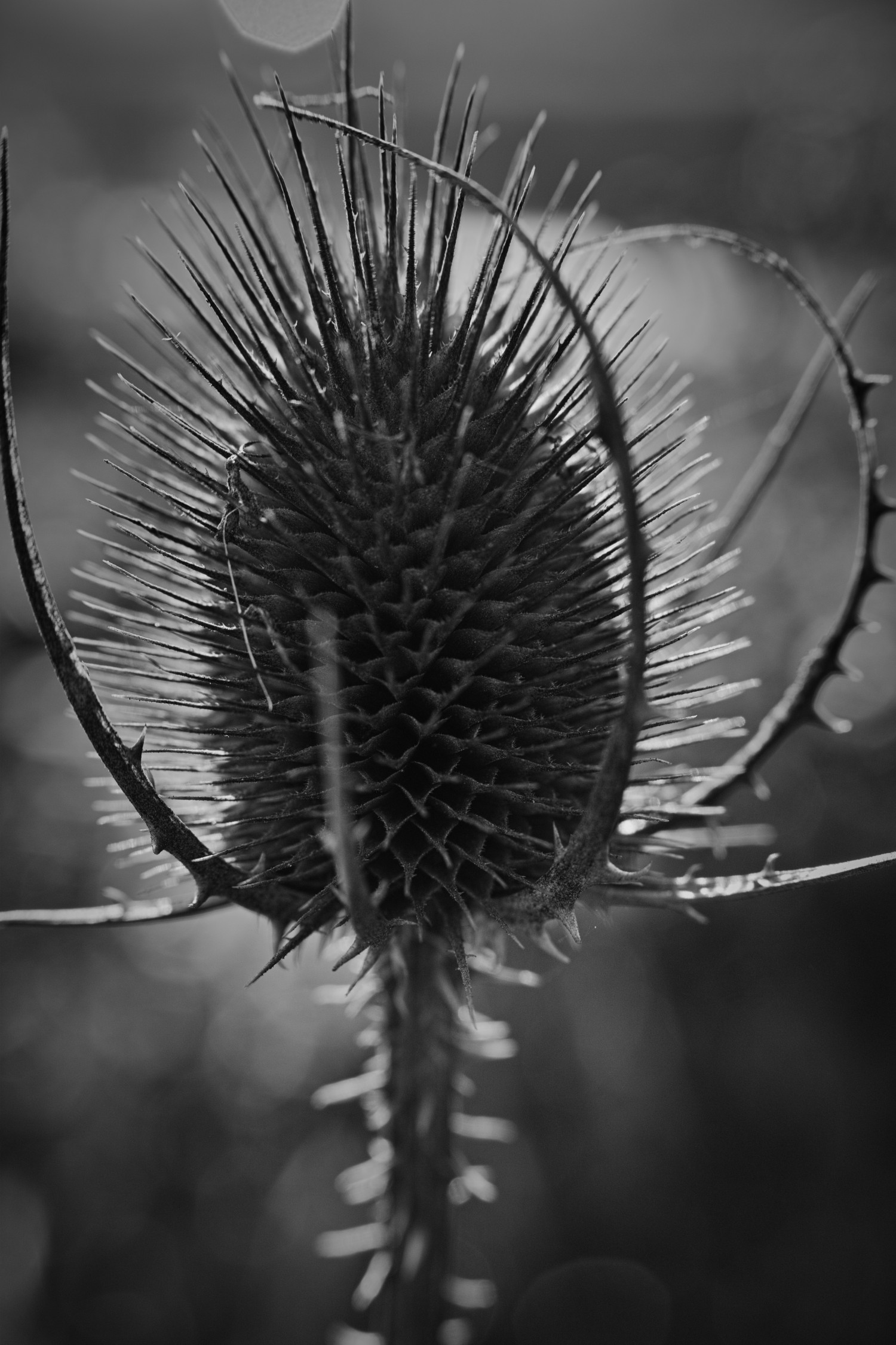 Natur pur | Schwarzweiß-Fotografie