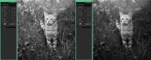 SIGMA Photo Pro | Die Fill-Light-Hintergrundunschärfe