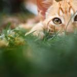 In den Fokus gebracht   Haustierfotografie