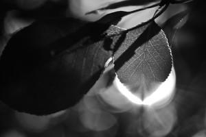 Licht und Schatten im Blätterwald | Schwarzweiß-Fotografie