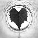 Das Blatt vor der Linse | Schwarzweiß-Fotografie