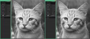 SIGMA Photo Pro | Die (zu) scharfe Katze