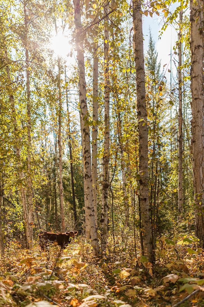 Wells Gray Provincial Park © Robert Sommer