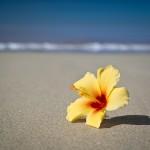 Hibiscus | 10 Tipps für entspanntes Fotografieren auf Reisen