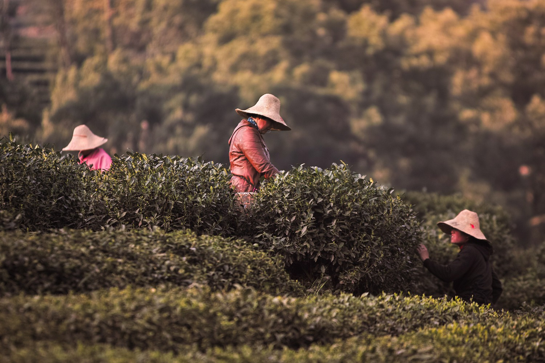 Hangzhou | Dietmar Baum Fotoreise powered by SIGMA