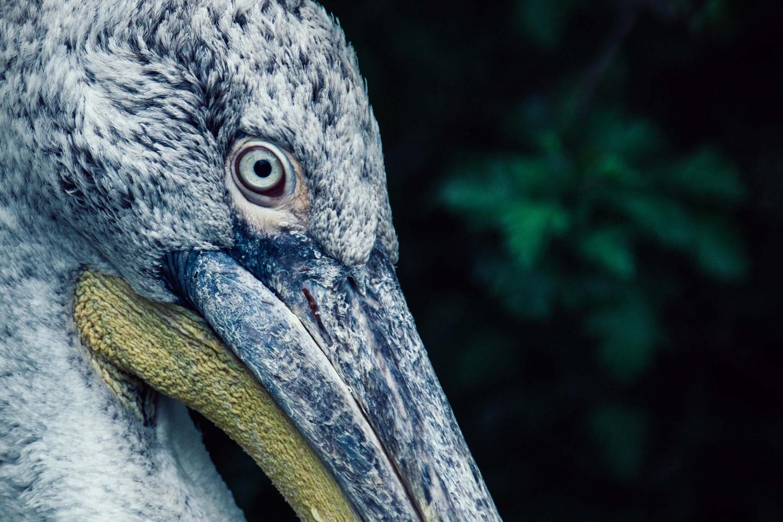 Exotischer Vogel im Visier | Tierfotografie