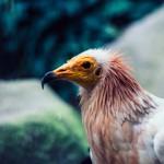 Ein Greifvogel bei der Jagd | Tierfotografie