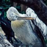 Ein exotischer Vogel bei der Schönheitspflege | Tierfotografie