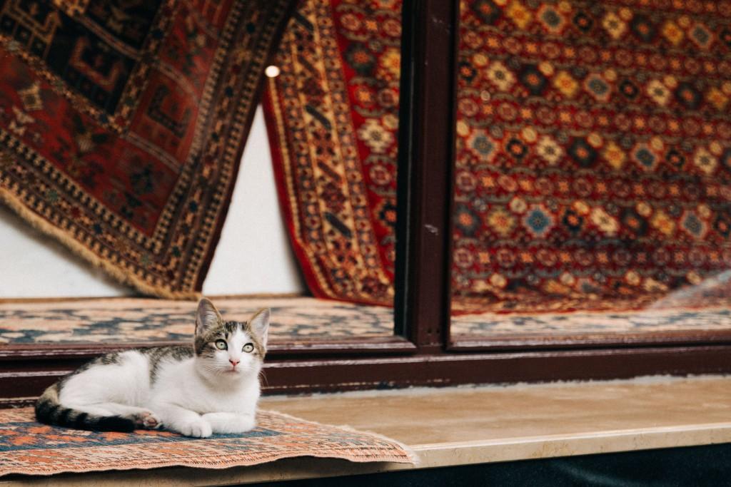 Tierischer Fokus | Reisefotografie