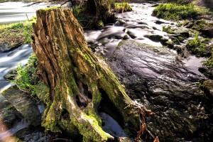 Grenzfluss Thaya - Langzeitbelichtung