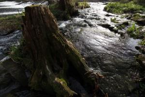 Grenzfluss Thaya - Original
