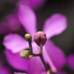 Orchidee | Makrofotografie