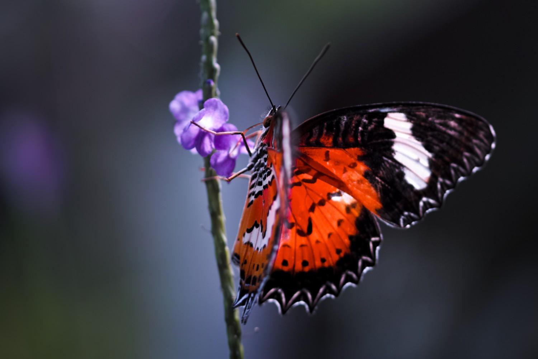 Schmetterling | Makrofotografie