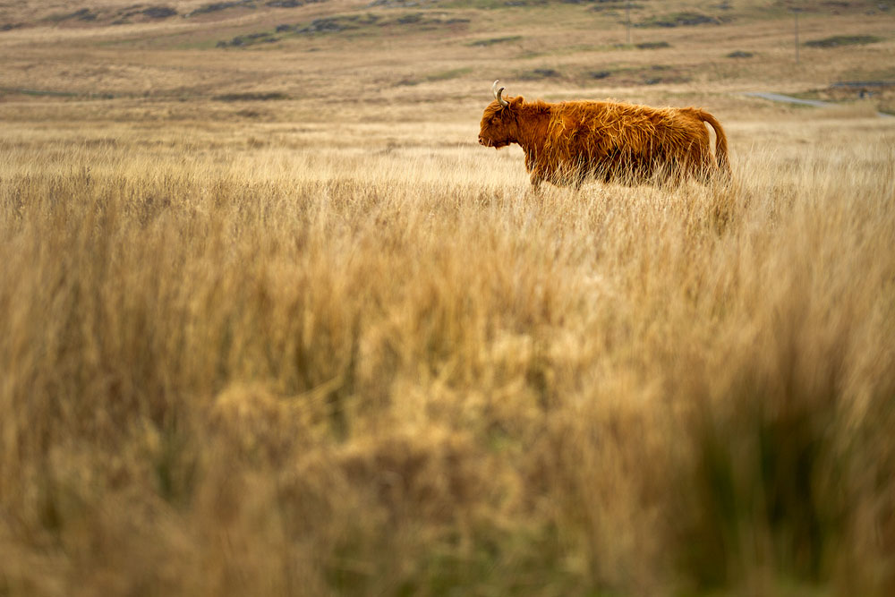 Landschaftsfotografie - SIGMA 50-100mm F1,8 DC HSM | Art ©Robert Sommer