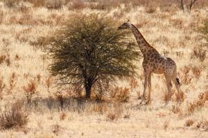 Kalahari ©Kevin Winterhoff