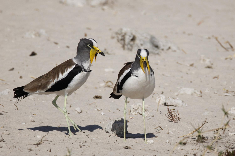 Vögel ©Andreas Winkel