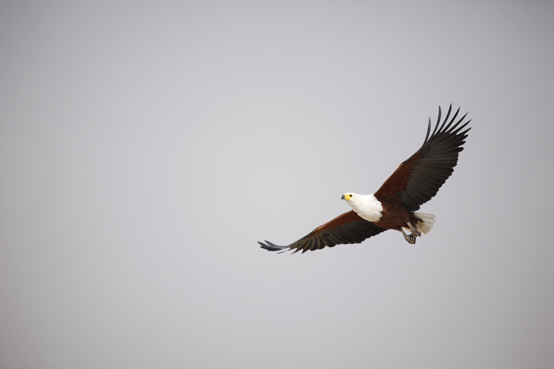Adler ©Andreas Winkel