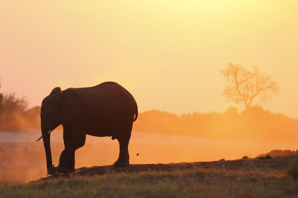 Elefant ©Andreas Winkel