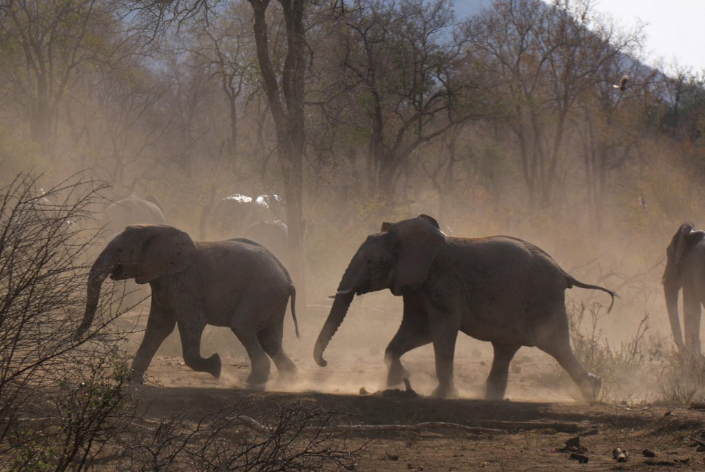 Elefanten ©Andreas Winkel