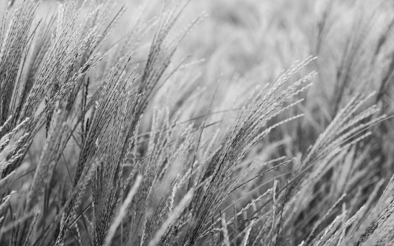 Monochrom mit der sd Quattro © Antonia Moers