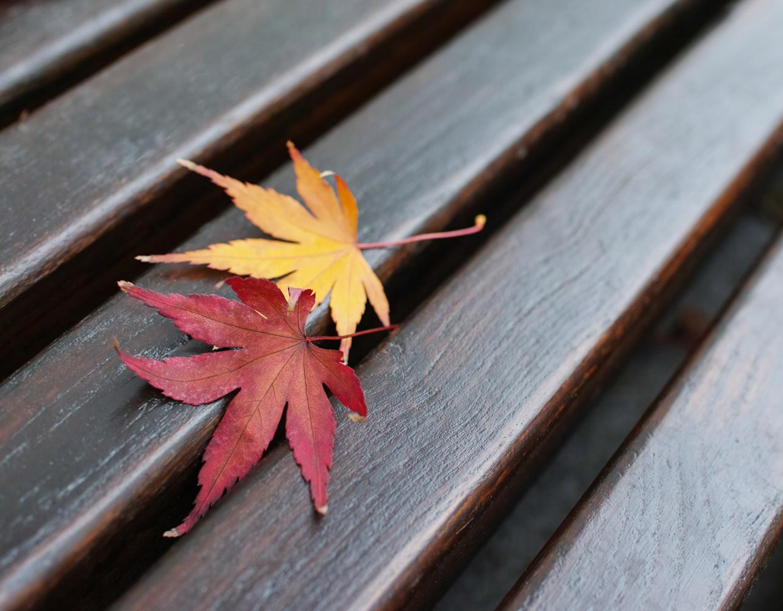 Herbst © Antonia Moers