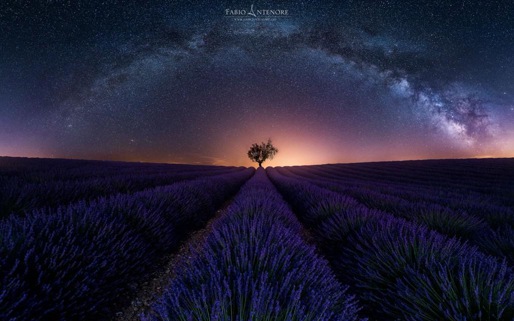 Purple Arch © Fabio Antenore