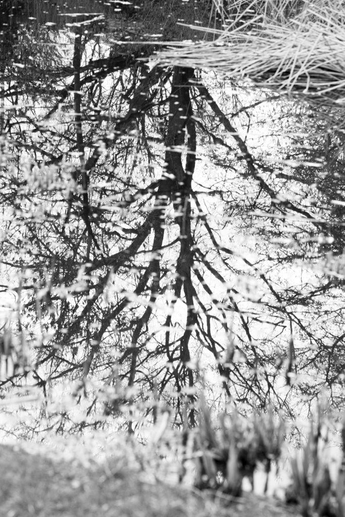 Spiegelung © Antonia Moers