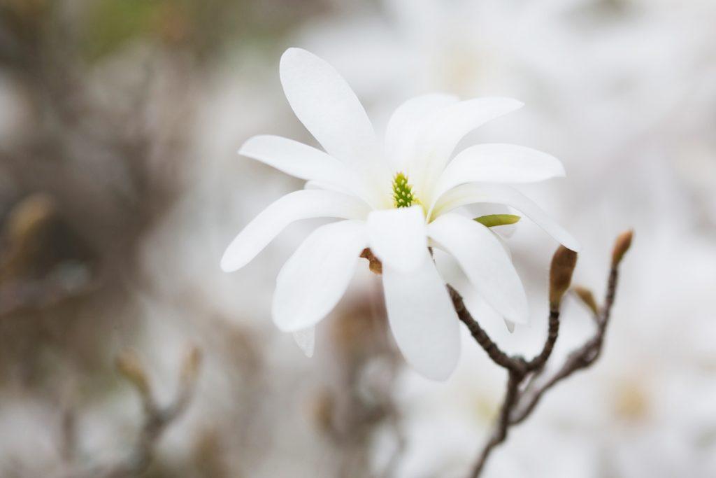 Frühlingserwachen © Antonia Moers