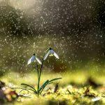 Pflanzen fotografieren © Robert Sommer