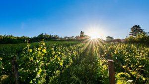 ...I heard it through the grapevine... © Stefan Engler