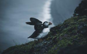 Island © Max Münch