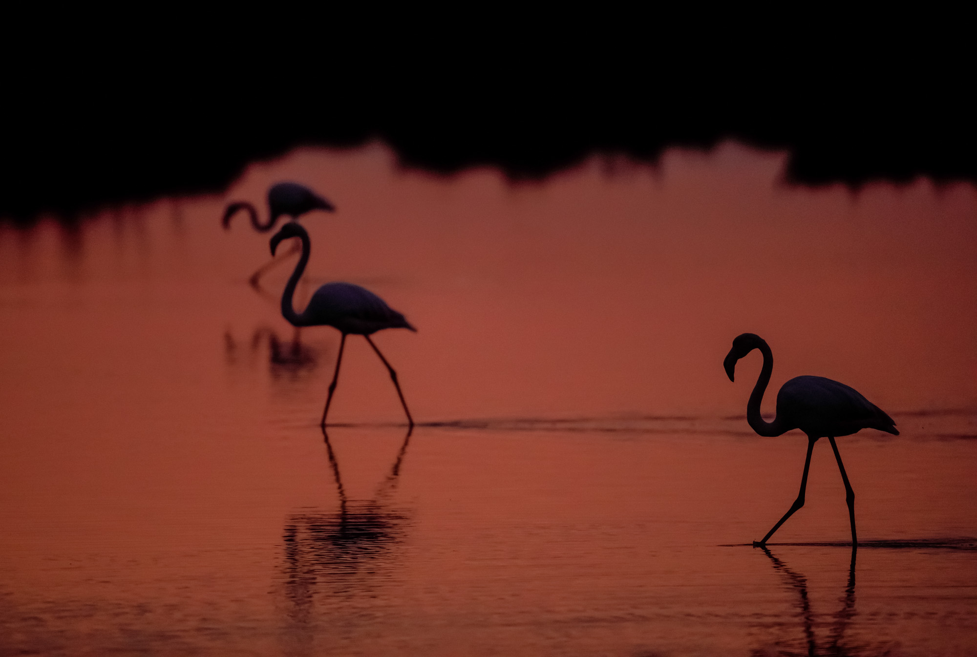Camargue Flamingo Sunset © Kevin Winterhoff