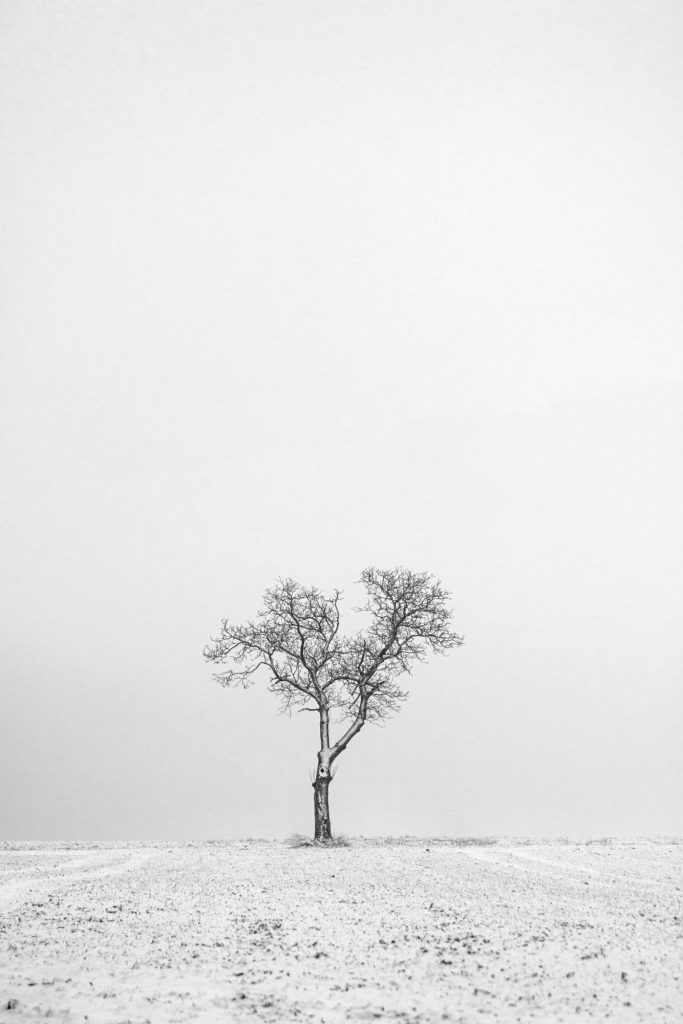Weihnachtsmotiv © Andreas Matejcek