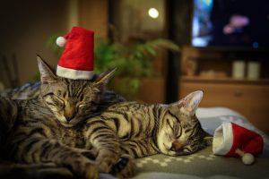 Weihnachtsmotiv © Andreas Schneider