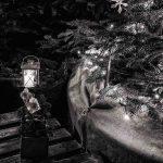 Weihnachtsmotiv © Florian Molau