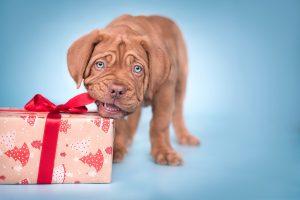 Weihnachtsmotiv © Marie Langreder