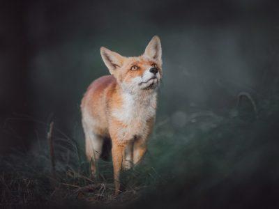 Die Fotografie am Scheideweg © Kevin Winterhoff