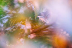 Makrofotografie © Ines Mondon